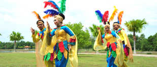 THE DANCE OF LITTLE BANIONG BIRD